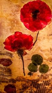 La Rose en Chute